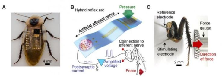 Synaptic Electrode